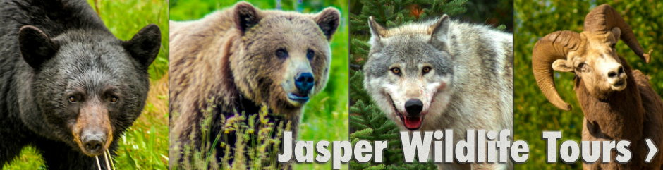 Book Jasper Wildlife Tours