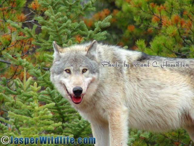 Jasper Wildlife